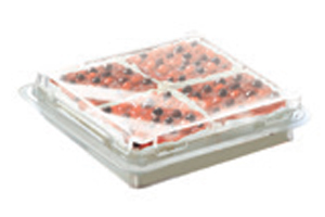 italian desserts in foodservice packaging